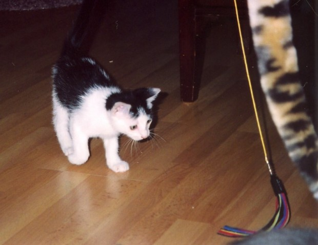 24-2003-08-13 Prancer stalking
